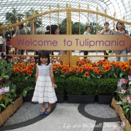 Fairytales Come Alive With Tulipmania