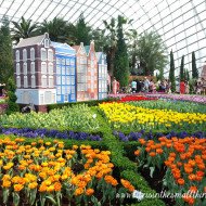 Tulipmania 2014: In Full Bloom At Gardens By The Bay